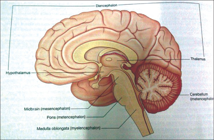 Split Brain Syndrome One Brain But Two Conscious Minds Agrawal D